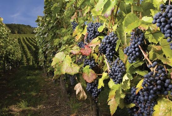 Wines from Macedonia Offer Difference Says Harpers
