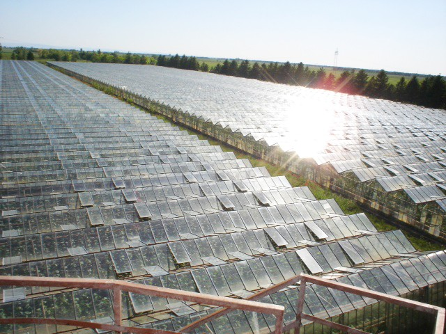 Signature Glasshouse Production in Serbia
