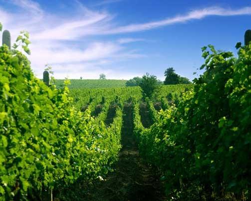 Stobi Winery Macedonia, the Ultimate Wine Tourism Destination