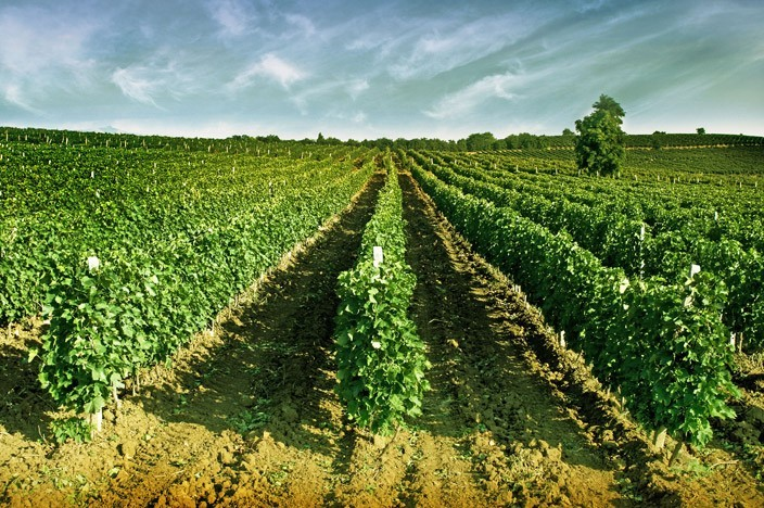 Macedonia listed as one of Top 5 International Wine Destinations